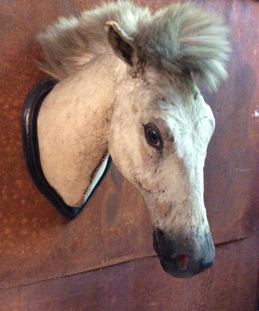 Antique horse's head – Italian Taxidermy