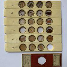 Set of Six Large Size Antique Microscope Sliders