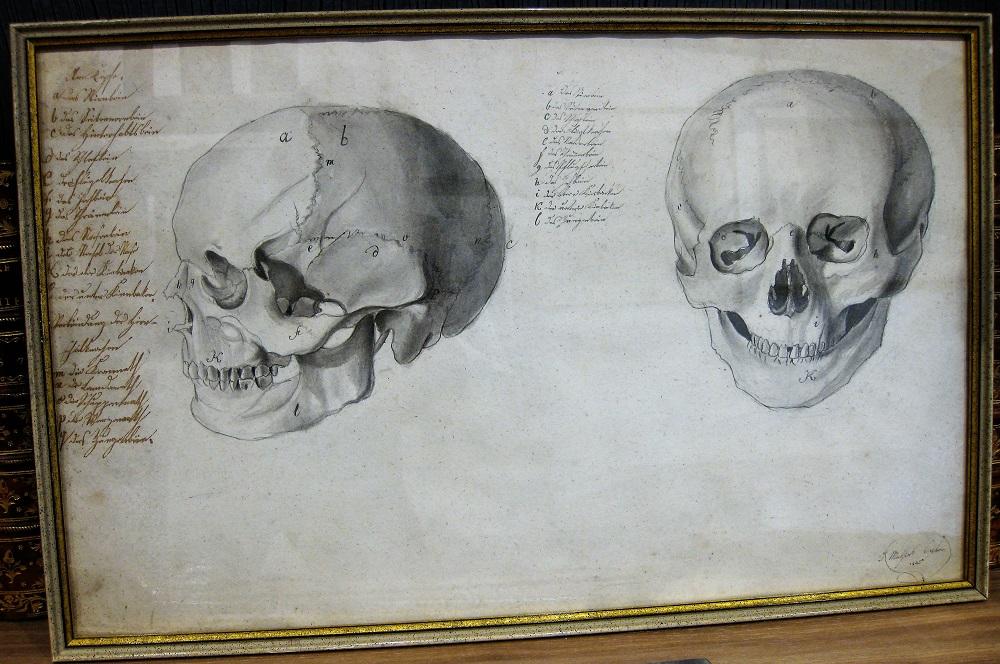 Two original drawings of human skull – Germany, 1835