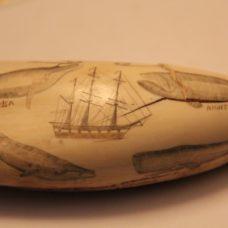 ~GOOD SCRIMSHAWED WHALES TOOTH-HMS PILGRIM-4 WHALE SPECIES~