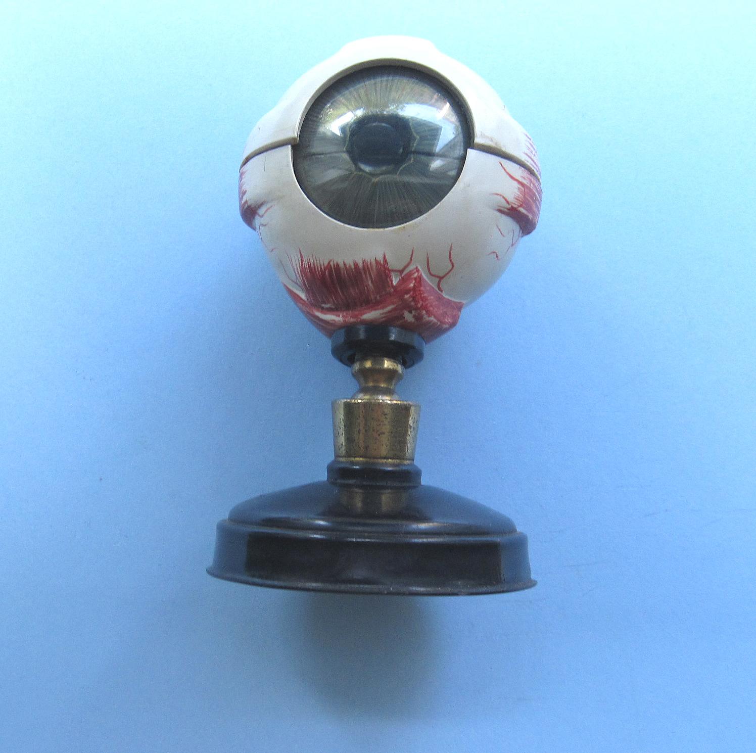 C1930 Hamblin Anatomical Eye Model w. Labeled-Original Carton