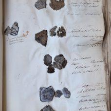 An important manuscript  mycological herbarium of lichens and lichenicolous fungi – France – circa 1850-1870