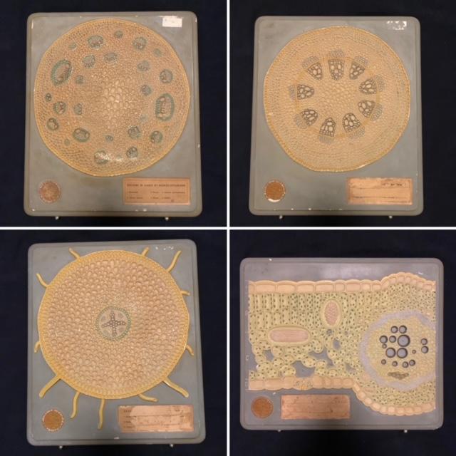 4 great Italian botanical models by Paravia